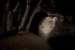 tła ilustracyjny jadowity węża biel obrazy stock