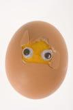 tła jajecznych oczu śmieszny odosobniony biel Fotografia Stock
