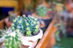 tła kaktus odizolowywający garnka biel Zdjęcie Stock