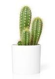 tła kaktus odizolowywający garnka biel Zdjęcie Royalty Free