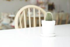 tła kaktus odizolowywający garnka biel Fotografia Stock