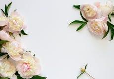 tła karcianego powitania strony szablonu ogólnoludzki sieci ślub Obraz Royalty Free