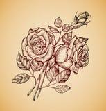 tła karciani kwiaty strony szablonu ogólnoludzką rocznika sieć Ręka rysujący retro nakreślenie kwiat wzrastał również zwrócić cor Obrazy Royalty Free