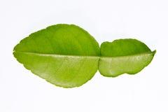tła karmowi składniki odizolowywający kaffir liść wapnią tajlandzkiego biel Zdjęcia Stock