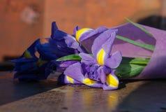 tła karty kwiatu powitania irysa strony szablonu cechy ogólnej sieć obraz royalty free