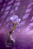 tła karty kwiatu powitania irysa strony szablonu cechy ogólnej sieć Zdjęcie Royalty Free