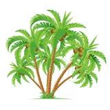 tła kokosowego projekta ilustracyjne palmy biały Zdjęcia Stock