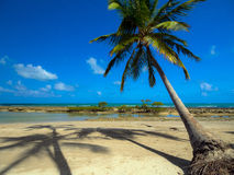 tła kokosowego projekta ilustracyjne palmy biały fotografia stock