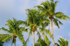 tła kokosowego projekta ilustracyjne palmy biały Obraz Stock