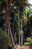tła kokosowego projekta ilustracyjne palmy biały Obraz Royalty Free