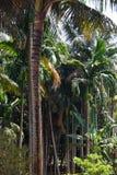 tła kokosowego projekta ilustracyjne palmy biały Zdjęcia Royalty Free