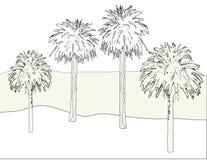 tła konturu palma Obrazy Royalty Free