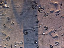 tła kotów zamkniętych psów przyrodni kagana portret w górę biel Obrazy Stock