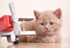 tła kota śmieszny ilustraci wektor Obrazy Royalty Free