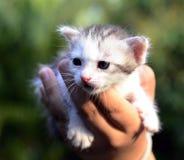 tła kota zieleni mała palma Obraz Stock