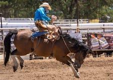 tła kowbojskiego graficznego grunge koński plakata rasy rodeo wektor dziki Fotografia Stock