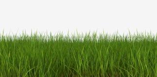 tła krzywy trawa odizolowywał gazonu perspektywicznego widok biel ilustracja wektor
