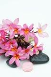 tła kwiatów frangipani menchii biel tropikalny pojęcie zdrój Zdjęcie Stock