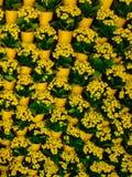 tła kwiatów ogrodowe floksów rośliny Obrazy Royalty Free