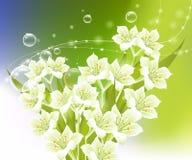 tła kwiatu wiosna Obrazy Royalty Free