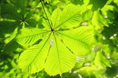 tła kwiecisty ulistnienia zieleni lato Lata tło liście na gałąź drzewo Textured liście zielony lata drzewo Obraz Royalty Free