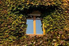 tła liść ściana Zdjęcia Stock