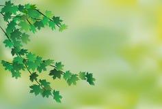tła liść klon Obrazy Royalty Free
