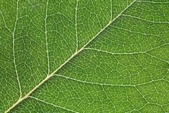 tła liść makro- tekstura Zdjęcie Royalty Free