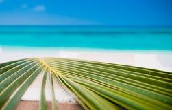 tła liść palma zdjęcie stock