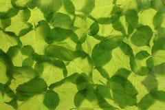 tła liść wiosna Obraz Royalty Free