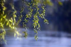 Tła liść zieleń Fotografia Royalty Free