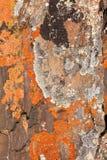 tła liszajów wzoru skała Obraz Stock