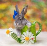 tła mały królika biel Obrazy Royalty Free