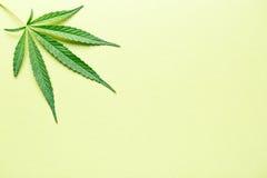 tła marihuany wybór odizolowywający liść robi biel twój fotografia stock