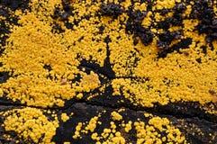 tła mech kolor żółty obraz royalty free
