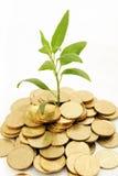 tła monet rośliny bogaty biel Obrazy Royalty Free