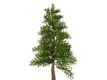 tła nagich bożych narodzeń wielki drzewny biel Zdjęcia Stock