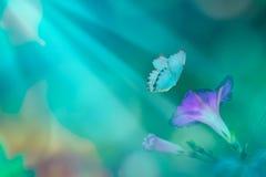 tła naturalny piękny Kwiatów fiołki w latających motylach i blask księżyca Magiczny wiosna czas kosmos kopii fotografia stock