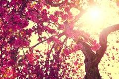 tła natury przestrzeni wiosna tekst twój obraz royalty free