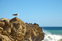 tła natury skały seagull seascape siedzący niebo Obraz Stock