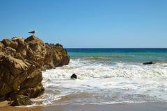 tła natury skały seagull seascape siedzący niebo Fotografia Royalty Free