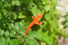 Tła 018 - Odświeżać świeżych zielonych liście z czerwonym kwiatem Fotografia Stock