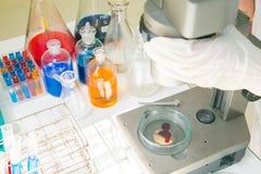 tła odosobniony laborancki naukowa biel działanie Fotografia Royalty Free