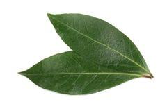 tła odosobniony laurowy liść biel Świezi zatoka liście Odgórny widok zdjęcie stock