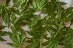 tła odosobniony liść marihuany biel Obraz Stock