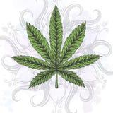 tła odosobniony liść marihuany biel Ręki rysować odosobnione ilustracje royalty ilustracja