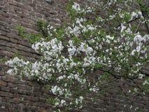 tła okwitnięcia ulistnienia pomarańczowy drzewo Obrazy Stock
