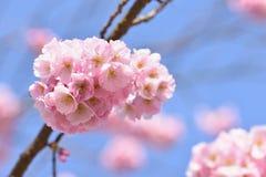 tła okwitnięcia ulistnienia pomarańczowy drzewo natury tło w słonecznym dniu wiosna kwiat Piękny sadu i abstrakta zamazany tło Po Zdjęcia Stock