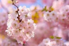 tła okwitnięcia ulistnienia pomarańczowy drzewo natury tło w słonecznym dniu wiosna kwiat Piękny sadu i abstrakta zamazany tło Po Fotografia Royalty Free