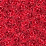 tła ostrości czerwone róże selekcyjne Obrazy Royalty Free